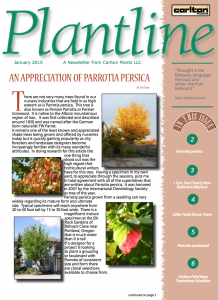 Persian Parrotia Article