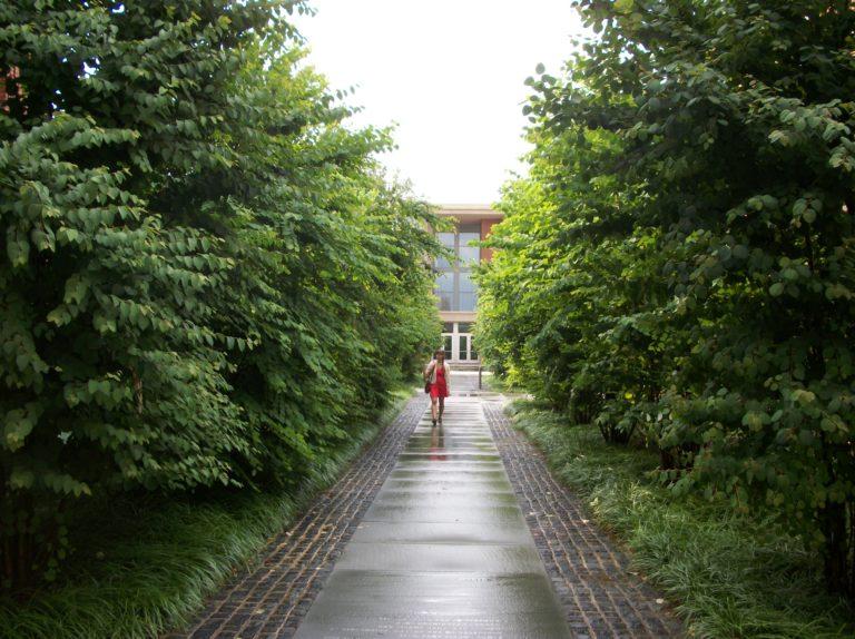 Halka Trees at Butler College at Princeton University